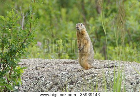 Gopher looking for people