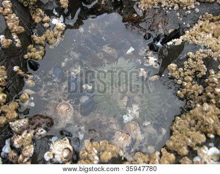 Life in a Tide Pool 1