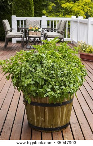 Home Garden Herbs On Outdoor Patio