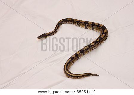 Crawling Python
