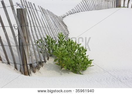 Fallen Fencing On White Beach