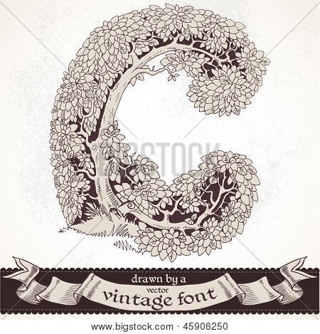 Fable forest hand drawn by a vintage font - C