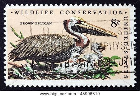 Postage Stamp Usa 1972 Brown Pelican, Bird