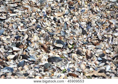 Fondo de piedra Concha y guijarro