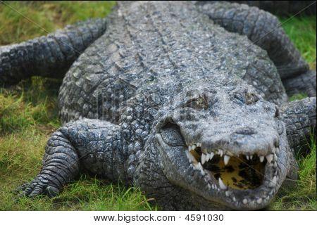 Gator Laugh