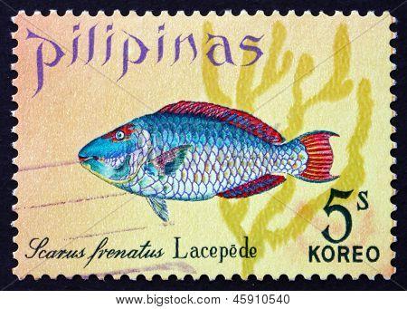 Postage Stamp Philippines 1972 Parrotfish, Scarus Frenatus, Fish