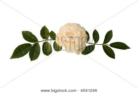 Sprig Of Tea-rose