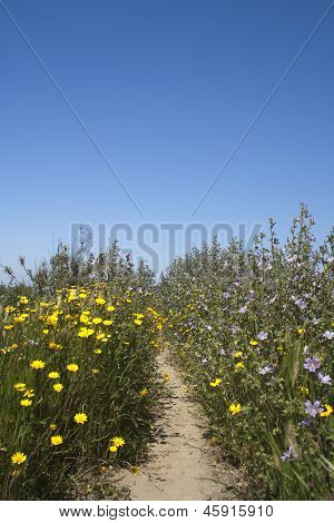 Wild Flowers At The Ria Formosa Nature Reserve, Qinta Do Lago, Algarve, Portugal