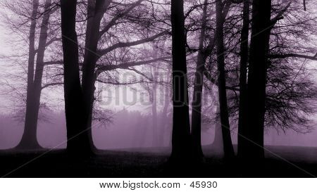 Trees At Dawn With Lavendar Light