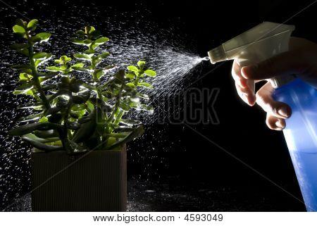 Watering Plants