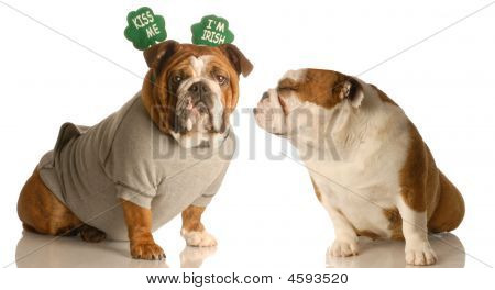 St Patricks Bulldogs Kiss Me Im Irish