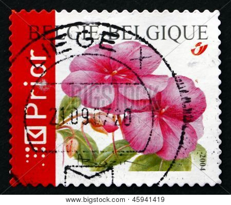 Postage Stamp Belgium 2004 Impatiens, Flowering Plant