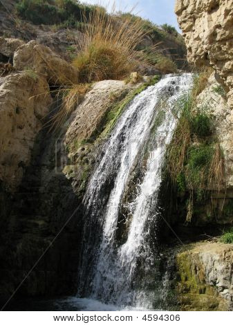 reserve engezi by tht Dead sea Israel