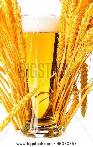 glass of lager isolated on a white background.