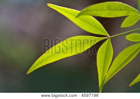 Backlit Green Leaves