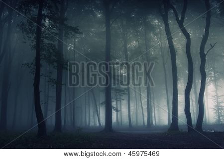 Dark beautiful forest with thick fog