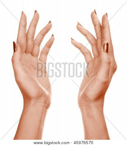 Hands Isolated On A White Background.
