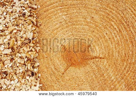Fir Tree Rings With Sawdust