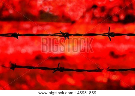 Barbed Wire On Red Background