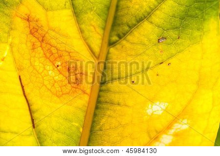 Dried Yellow Leaves Close Up
