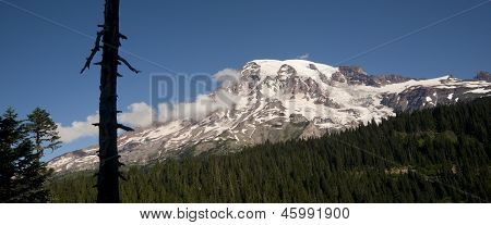 Horizontal Composition Mt. Rainier Dense Forest Cascade Range Washington