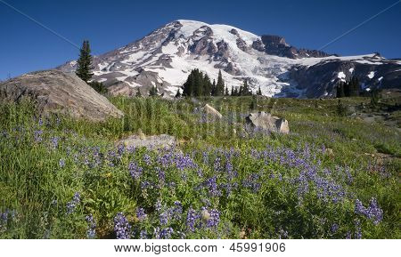 Majestic Snowcapped Mountain Peak Mt. Rainier Wildflowers Cascade Range