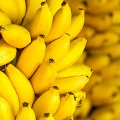 image of banana tree  - Bunch of ripe bananas background - JPG