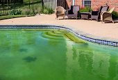 foto of green algae  - Back yard swimming pool behind modern single family home at pool opening with green stagnant algae filled water before cleaning - JPG