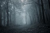stock photo of eerie  - Deep dark forest with thick forest in late autumn - JPG