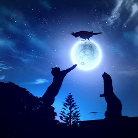 picture of goodnight  - Silhouettes of animals in night sky with full moon - JPG