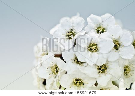 Tiny White Flower Bouquet Macro