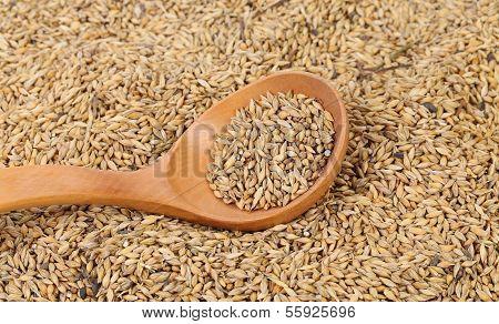 Grains of barley background