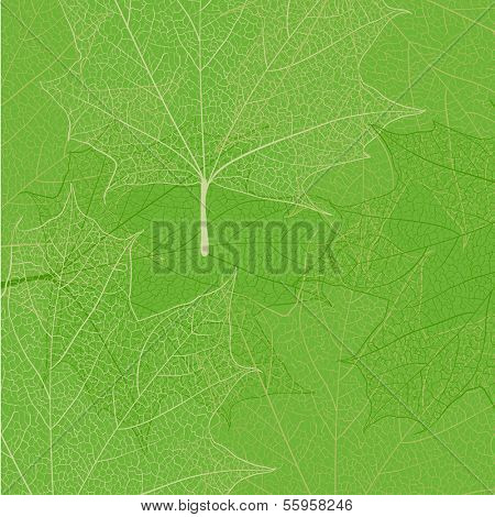 Leaf skeleton on green background