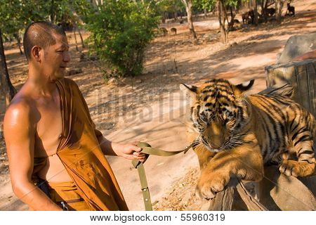 Buddhist Monk With A Bengal Tiger