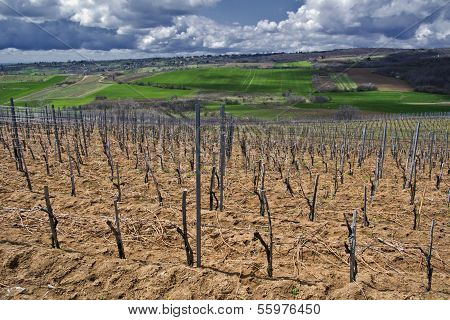Fields And Vineyards