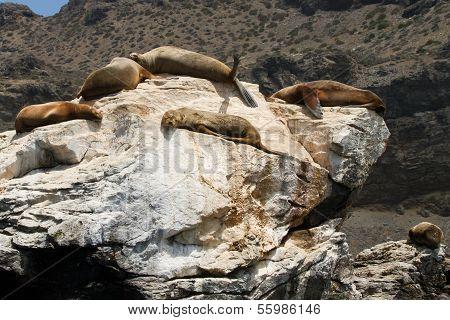 Nature and wildlife sanctuary