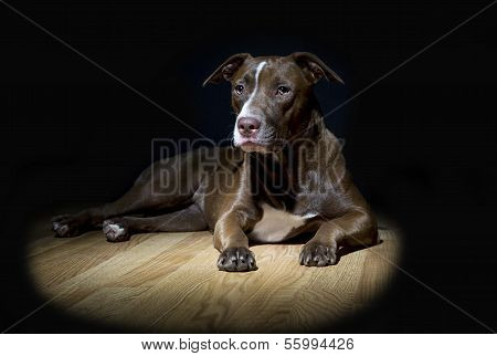 Spot Light Dog Portrait