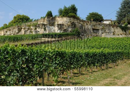 Gironde, Vineyard Of Saint Emilion In Aquitaine