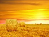 image of hay bale  - Golden sunset over farm field with hay bales - JPG