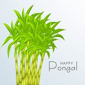 Happy Pongal, harvest festival celebration in South India with sugarcane on blue background.