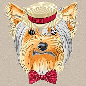 stock photo of headdress  - hipster dog Yorkshire Terrier breed in a Straw boater and bow tie - JPG