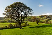 stock photo of leafy  - The English tree stand alone in the countryside - JPG