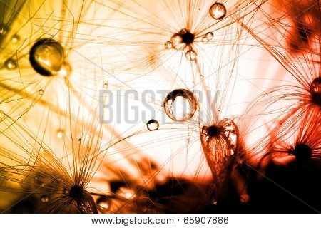 Abstract plant seeds dandelion