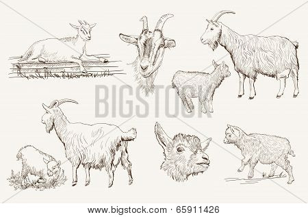 goat vector hand drawn