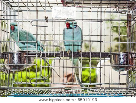 Birds In A Cage At The Birds Market In Hongkong
