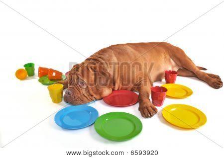 Dog Lying Among Plates And Cups