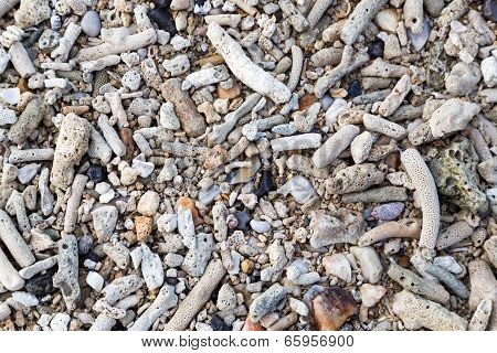 Many Coral On A Beach