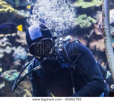 Portrait Of A Diver