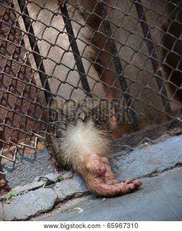 Monkey Behind Bars Closed, Asks Food