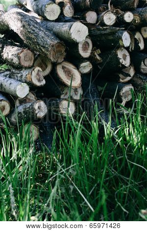 Long fresh green grass in front of a woodpile of stacked hewn logs and branches ready for use as winter fuel showing the cut cross sections at the ends